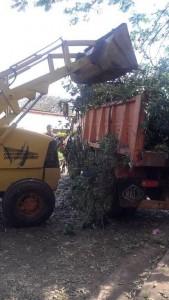 limpieza ramas